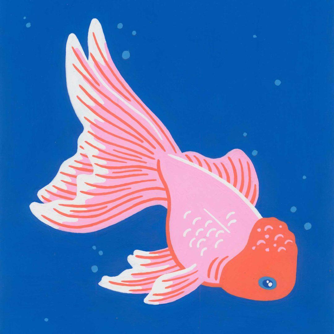 Pet portrait - Monty the fish